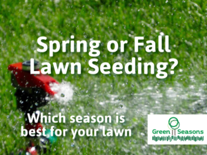 Spring or Fall Seeding