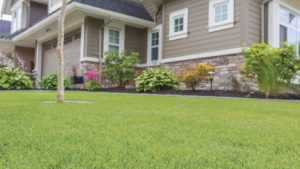 Lawn Care in Riverside